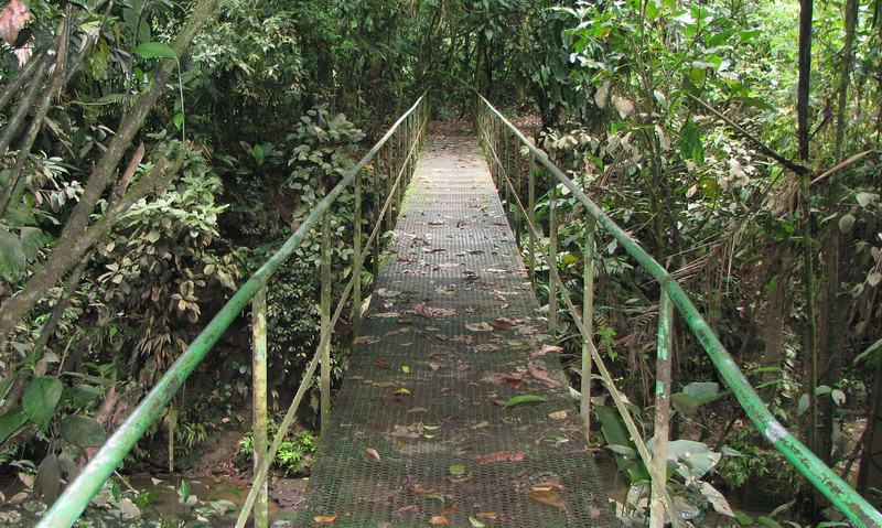 La Selva - Bridge Going To River Station Or Jungle Shack
