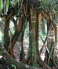 La Selva - An Arbor That's Been Grown Over By Trees