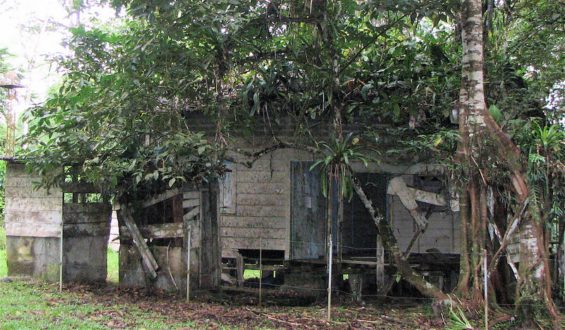 La Selva - And Then A Surprise - A House Being Taken Over By The Jungle