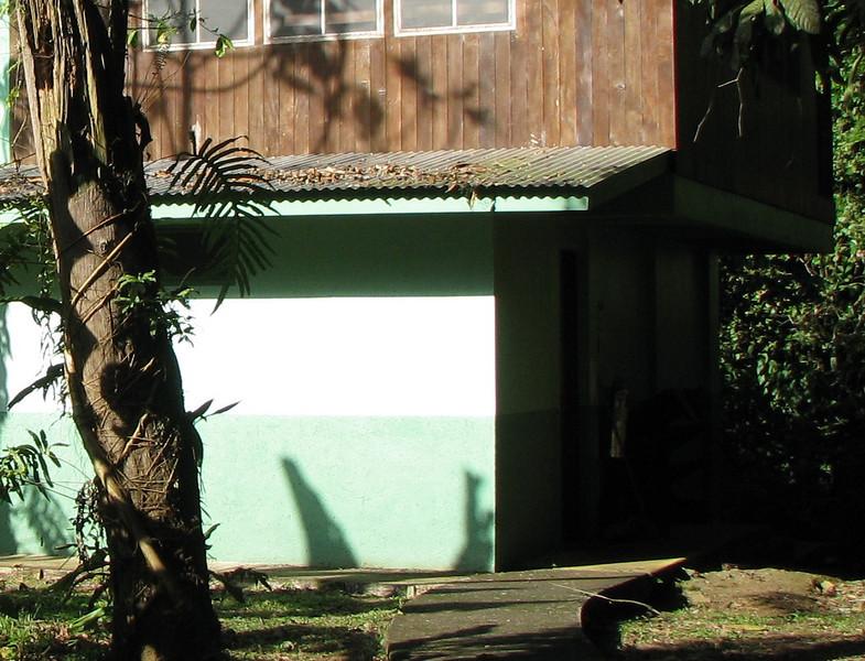 Cabina 5 - My Shaded Room On Right Bottom  - La Selva