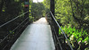 A Very Long Suspension Bridge Over Rio Puerto Viejo  - La Selva