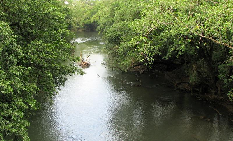 Downstream View of Rio Puerto Viejo  - La Selva