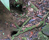 Examples Of Holes Frequently Seen On Trails  - La Selva