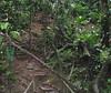 Heading Uphill At The End Of The Bridge - La Selva Jungle Trek on SUR Trail
