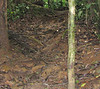 Slippery Swampy Trail - La Selva Jungle Trek
