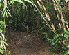 Vines Growing Everywhere Keep You Reminded Of Snakes - La Selva Jungle Trek on SUR Trail