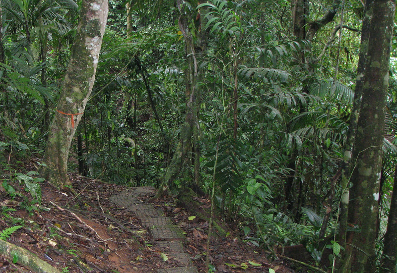 This Was An OH MY Moment - The Trail Drops Off The Bluff Above The River - La Selva Jungle Trek on SUR Trail