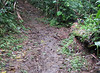 Not Too Muddy, But Still Slippery - La Selva Jungle Trek on SUR Trail