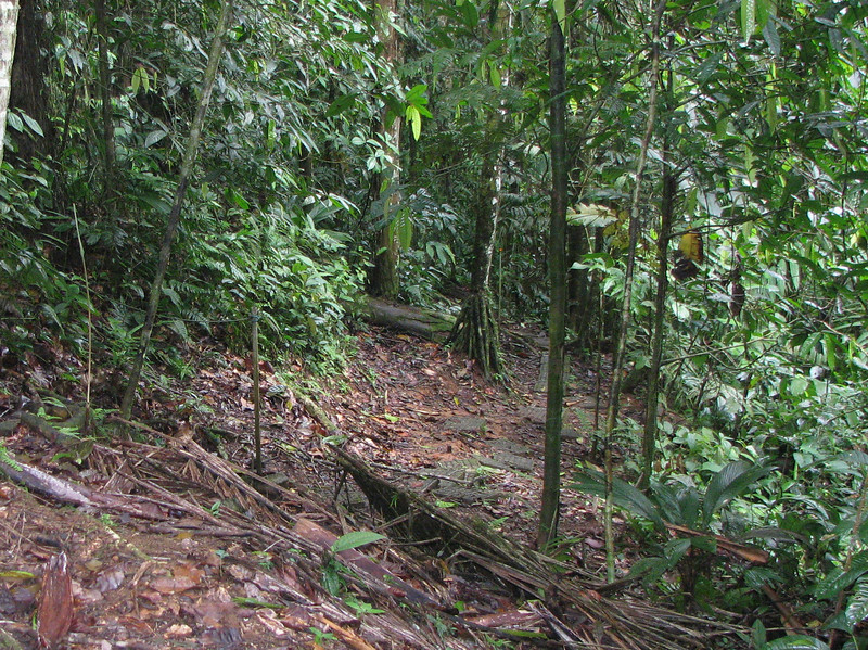 Heading Downhill - Glad To Have Those Concrete Blocks To Tell Me Where To Go - La Selva Jungle Trek on SUR Trail