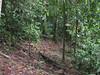 Heading Downhill - Glad To Have Those Concrete Blocks To Tell Me Where To Go - La Selva Jungle Trek on SUR Trail