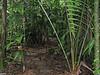 Finally Some Level Ground - La Selva Jungle Trek on SUR Trail