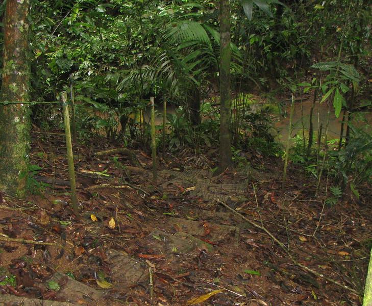 Thank God For Concrete And Ropes - La Selva Jungle Trek on SUR Trail