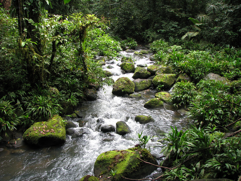 Swamp Stream - What a Reward As I Was Headed Back to the Cabin - La Selva Jungle Trek