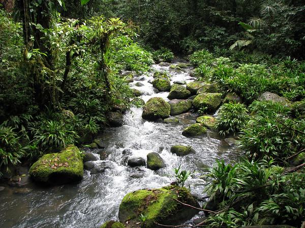 La Selva - First Jungle Trek and Swamp Hike