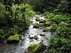 Swamp Stream - What a Reward As I Was Headed Back to the Cabin - La Selva Jungle Trek