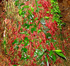 Plant With Red Roots At The Base Of A Tree - Looked Like The Plant Was Bleeding - La Selva Jungle Trek on SUR Trail