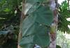 La Selva - Unusual Plant On Tree Trunk