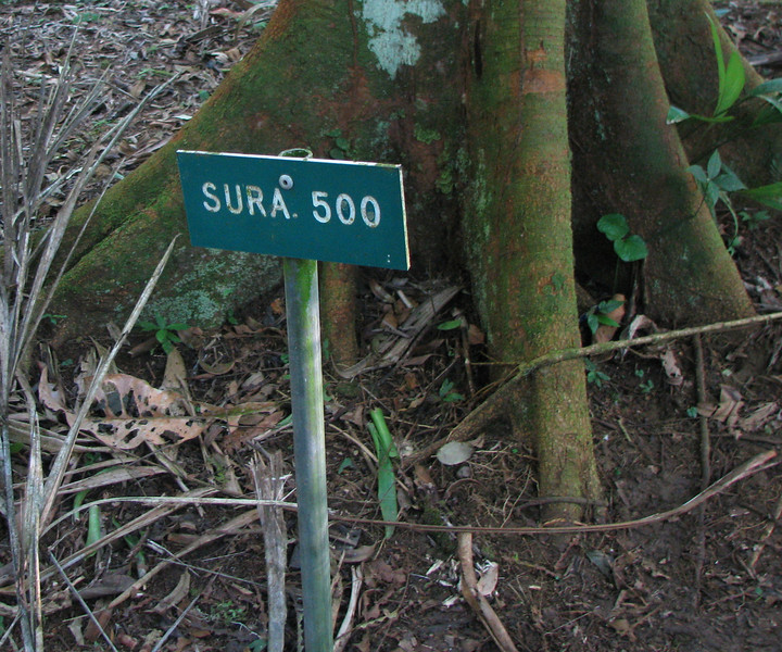 La Selva - Our Adopt-A-Trail Marker Where Our Name Will Go