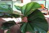 La Selva - Unique Fan Type of Palm