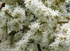 La Selva - Closeup Of Flower