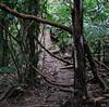 La Selva - Trail Down To My Favorite River View