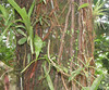 La Selva - Look At The Incredible Density Of Things That Grow On One Tree