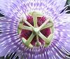 La Selva - Center Of Passion Flower