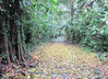 If Tropical Rainforests Had Autumn, This Would Be It - La Selva Biological Station - Costa Rica