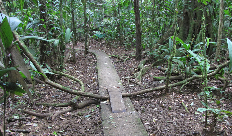 """Steel Foot Bridge To Preserve The Vine Across The Path - La Selva Biological Station - Costa Rica Related Article:  <a href=""""http://www.thenatureinus.com/2009/03/lift-me-up.html"""">Lift Me Up</a>"""