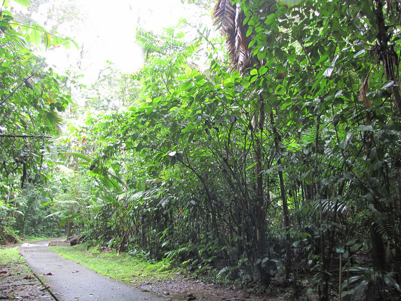 Looking to Left of Sign - STR 200 - Our Adopt-a-Trail Area - La Selva Biological Station, Costa Rica