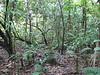Less Dense Rainforest - La Selva Biological Station - Costa Rica