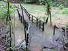 Cantarrana Boardwalk Swamp Trail is Under Water - La Selva Biological Station, Costa Rica