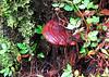 Unknown Tree Fungus - La Selva Biological Station, Costa Rica
