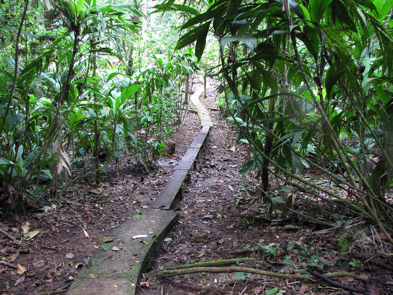 Trail Narrows - La Selva Biological Station, Costa Rica