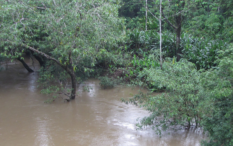 February 21 - River Rising From All The Rain - La Selva Biological Station - Costa Rica