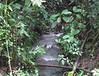 Stream on STR Trail at Bridge - La Selva Biological Station, Costa Rica