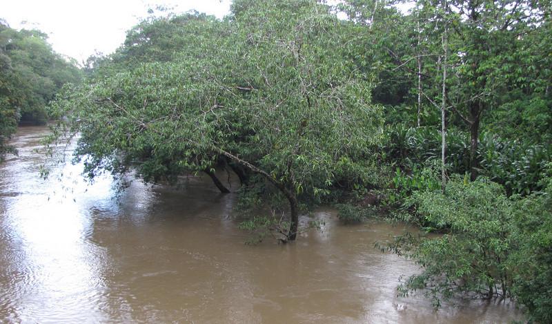 Februrary 21 - River Rising From All The Rain - La Selva Biological Station - Costa Rica
