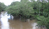 Februrary 21 - River Rising From All The Rain - La Selva Biological Station - Costa Rica