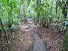 Trail View - La Selva Biological Station - Costa Rica
