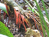 Unusual Tree Roots - La Selva Biological Station, Costa Rica