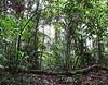 Rainforest Opening - La Selva Biological Station - Costa Rica