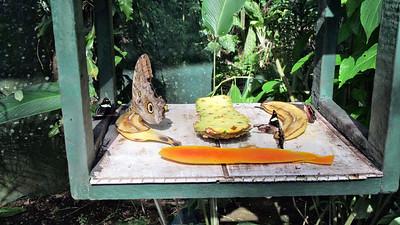 February 15 Tortuguero Day 1