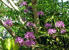 Finca Luna Nueva - Flowering Plant In Trees