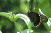 Finca Luna Nueva - Butterfly
