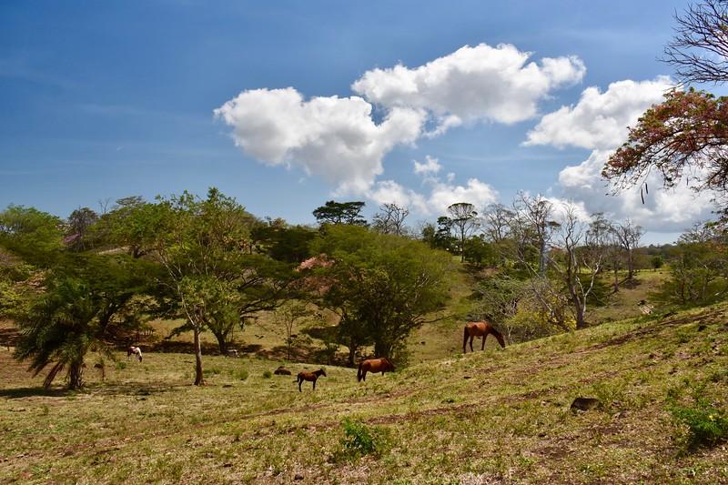 Finca Canas Castilla, Guanacaste, Costa Rica