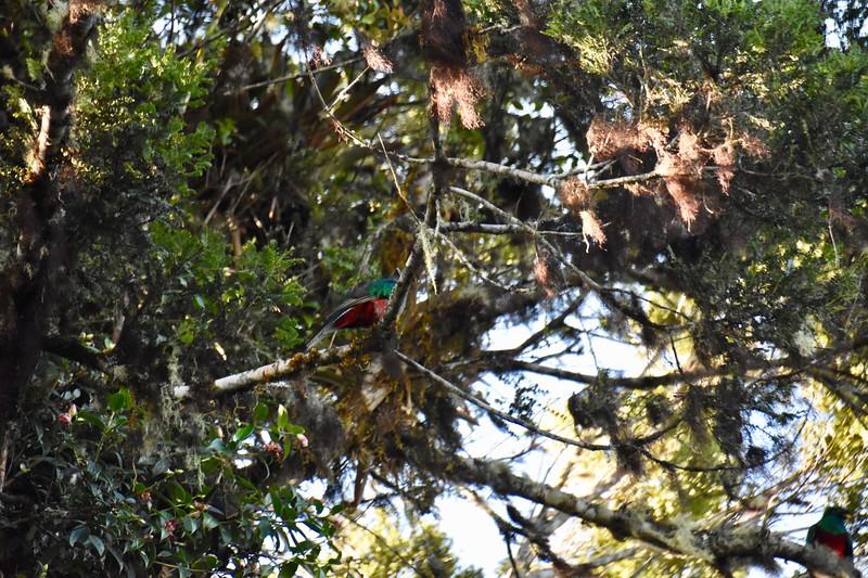 El Mirador de los Quetzales, San Jose, Costa Rica