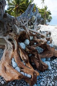 Driftwood -- Costa Rica