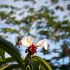 Butterfly -- Costa Rica