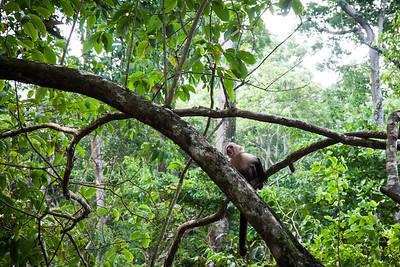 Monkey! -- Costa Rica