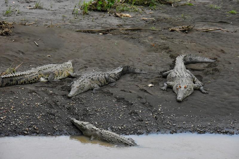 Crocodile Bridge, Puntarenas